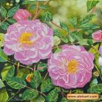 Набор для вышивки бисером «Плетистая роза»