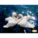 Набор для вышивки бисером «Вместе навсегда»
